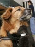 Куче, спасено от урагана