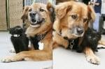 Куче, спасено от урагана Катрина, става бавачка на малки котенца