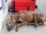 Невероятна история на кучето Херкулес, което оцелява по чудо