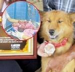 Куче спаси бебе, изхвърлено на боклука в Банкок