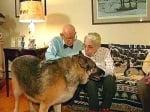 Куче спасява възрастна двойка
