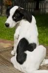Куче със сърце на гърба