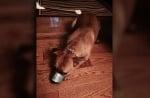 Куче със залепена уста