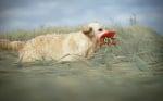 Куче в полето