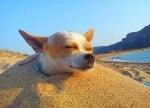 """""""Сладко се спи на плажа"""""""