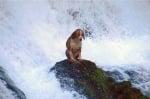 Куче върху скалата