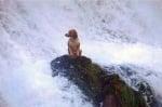 Куче във водопад
