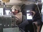 Куче във военен камион