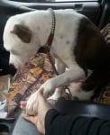 Куче за осиновяване от приют