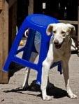 Куче, заклещено в малко столче