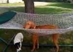 Куче, заседнало в хамак