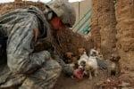 Кученца на война