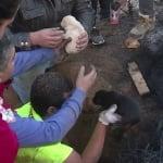 Кученца, спасени от пожар