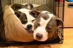 Кученце и клетка