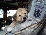 Кученце по време на война