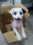 Кученце с мустак