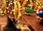 Кученце с папагал на Коледа