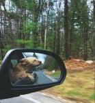 Кученце в кола
