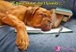 Кучешки петък