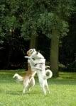 Кучета, които се прегръщат