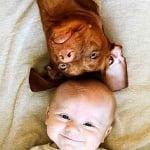 Кучета с бебета, легнали по гръб