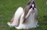 Кучета с дълга козина
