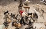 Кучатата на китайски милионер