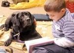 Кучето дава увереност