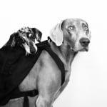 Кучето Харлоу губи своя най-добър приятел Седж