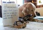 Кучето изяжда обувките ви