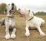 Кучето Лили с кучето Медисън