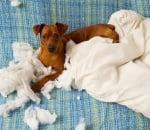 Какво да правите, когато кучето не ви слуша?