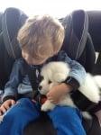 Кучето охранява стопанина си в колата