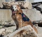 Кучето спасител