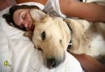 Кучето спи в леглото ви