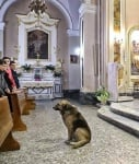 Кучето в църквата