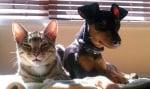 Кучето Зик и котката Уинстън, която се грижи за него