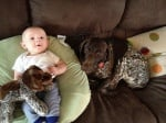 Курцхаар с бебе