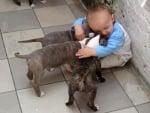 Кутрета с бебе