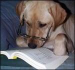 Лабрадор чете книга
