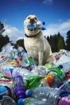 Лабрадор рециклира