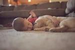 Лабрадорче с дете