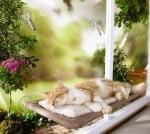 Легло на прозореца за котки