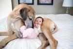 Легнал дог с бебе