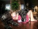 Легнал немски дог с малко момиченце