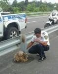Ленивец на магистрала