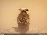 Лешояд на снимка