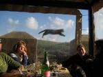 Летяща котка