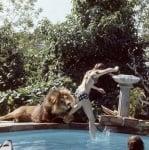Лъвът Нил си играе с Мелани Грифит