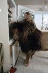 Лъвът Нил в хладилника